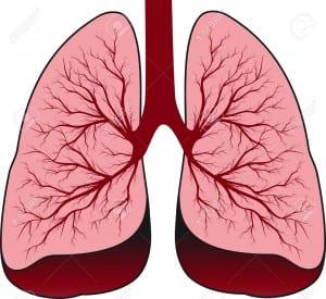 13453898-Bronchial-system-Human-lungs-Stock-Vector-lung-human-cartoon