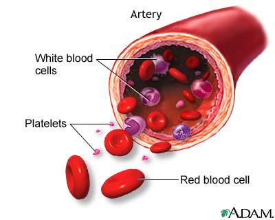 خلايا الدم
