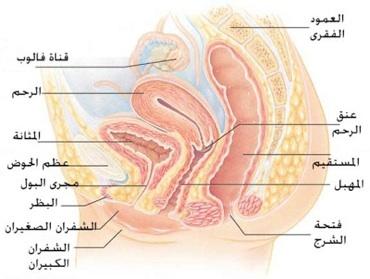 Photo of اختلال التوازن بين فطريات و بكتريا المهبل سبب التهابات المهبل