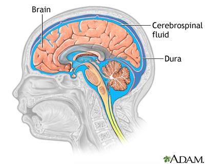 Photo of تركيب ووظائف السائل الشوكي Spinal fluid