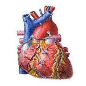 القلب والعلاج الكيميائى