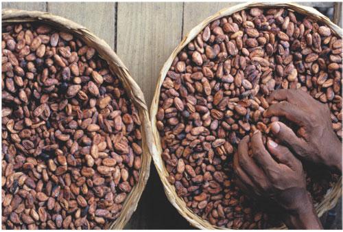 Photo of الكاكاو لصحة أفضل (Cacao)