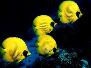أسماك الزينة لعلاج سرطان الجلد