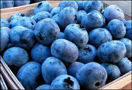 التوت الأزرق يكافح سمنة البطن و الارداف