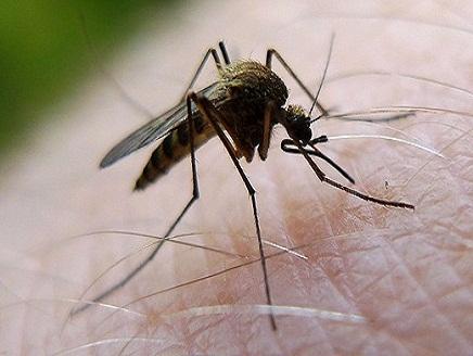 الطيور تحمل الفيروس وينتشر ليصيب البشر بواسطة البعوض