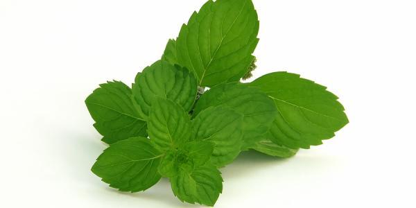علاج رائحة الفم الكريهة بالأعشاب