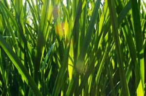 photos.demandstudios.com-80-235-fotolia_3841831_XS