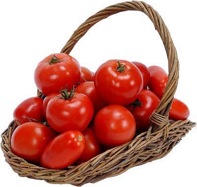 Photo of الطماطم (البندورة) والذئبة