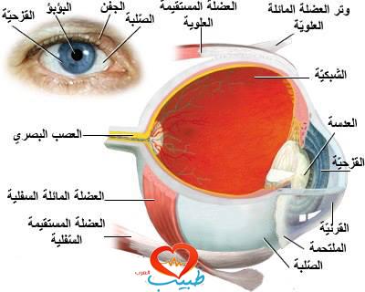 طبيب ع عيون