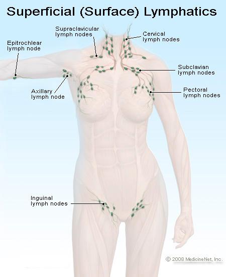 Photo of أين توجد العقد الليمفاوية في جسم الإنسان ؟