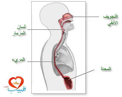 Photo of التهاب المريء – أعراضه وطرق معالجته