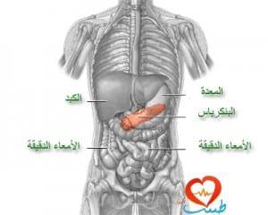 طبيب ع هضمpsd