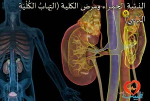 3d4medical_rm_illustration_of_kidneys