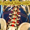 Nerve-roots-in-lower-back