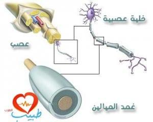 طبيب عرب عصبية تشريح 1