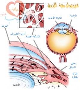 طبيب عرب عيون زرق