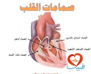 طبيب قلب 1