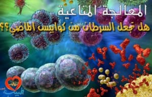 T cell dependent B cell activation