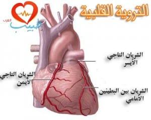 طبيب ع قلبية تشريح