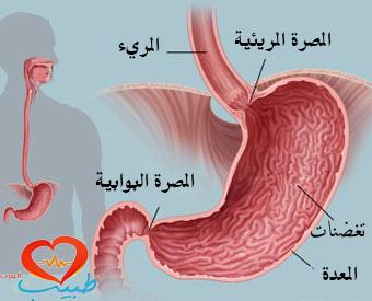 طبيب ع داخلية تشريح جهاز هضمي علوي
