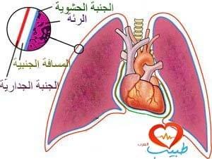 طبيب ع تنفسية تشريح جنبة