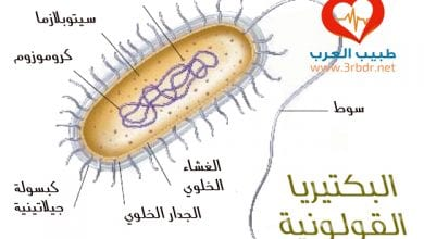 Photo of بكتيريا القولون E-coli