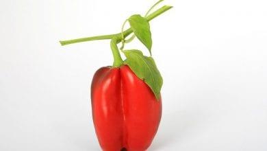 كم عدد السعرات الحرارية في الفلفل الرومي؟