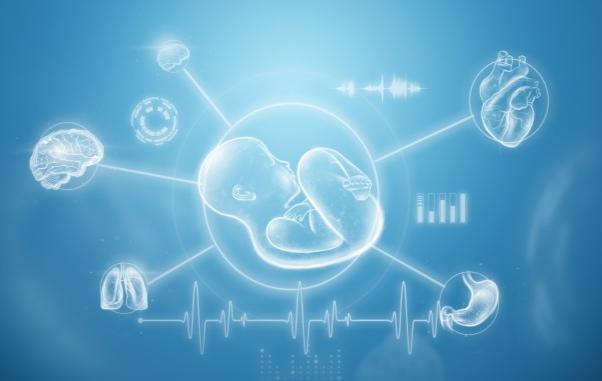 وزن الجنين في الشهر السادس